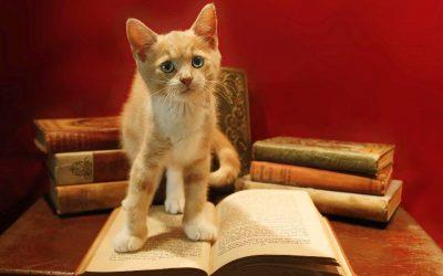 De beste kattenboeken over het gedrag van je kat