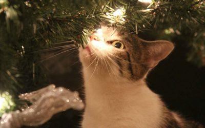 De kat en de kerstboom