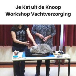 Workshop vachtverzorging Je Kat uit de Knoop