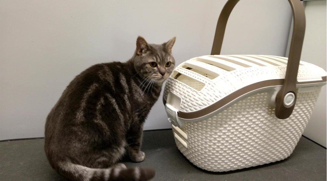 Hoe krijg ik mijn kat in het reismandje