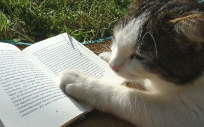 De mooiste kattenverhalen
