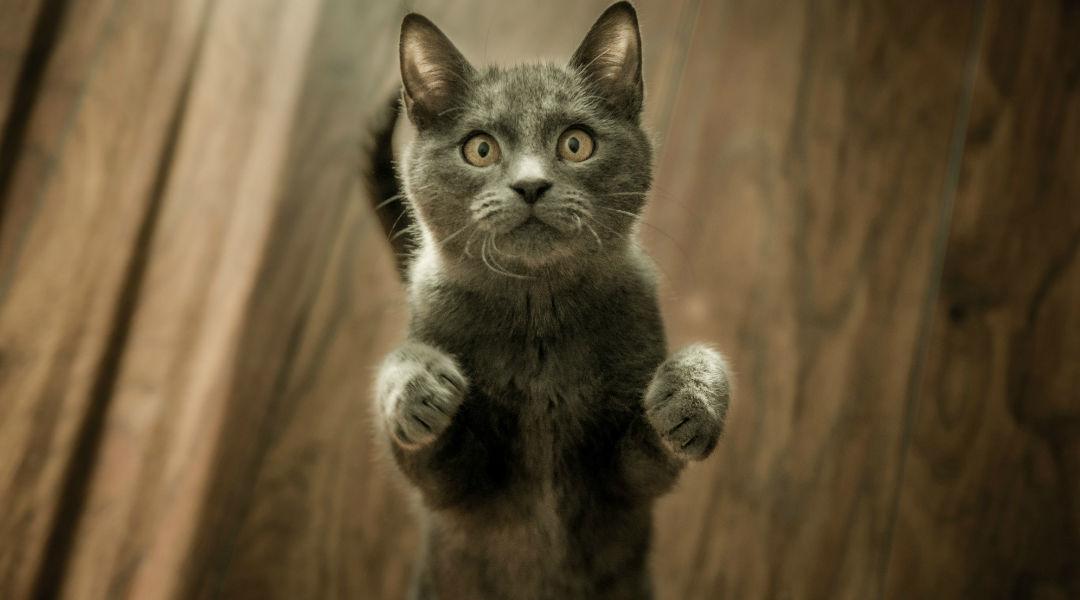 Lichaamstaal en Communicatie van de kat