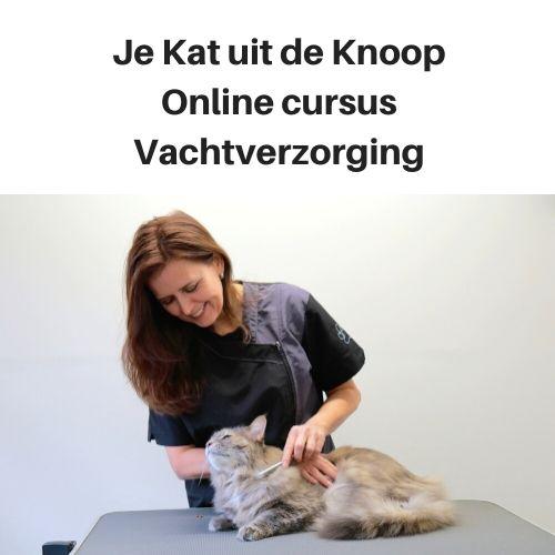Online cursus vachtverzorging Je Kat uit de Knoop