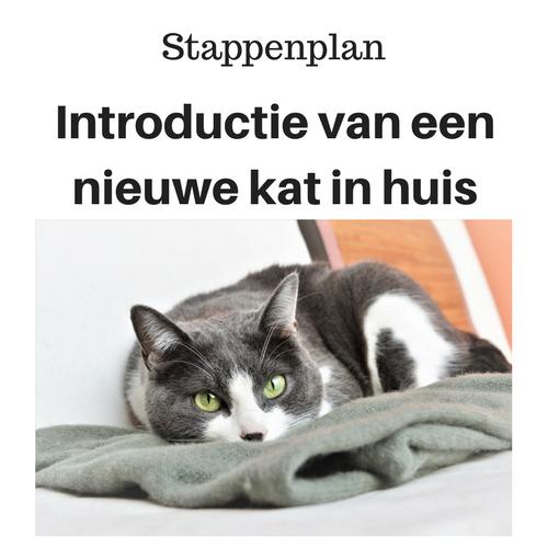 Stappenplan Introductie van een nieuwe kat in huis