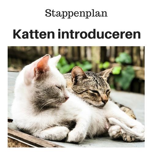 Stappenplan Katten bij elkaar introduceren
