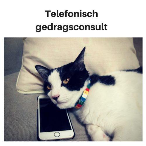 Telefonisch gedragsconsult kat