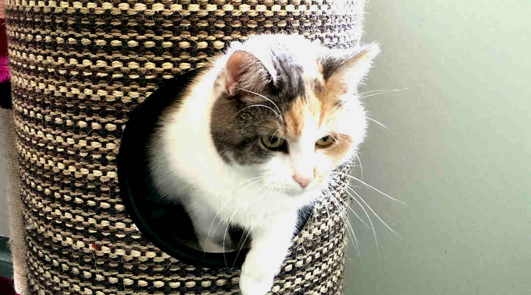 Waarom een kattengedragstherapeut