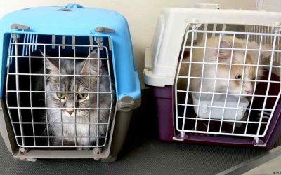 Hoe kies je de beste kattenreismand voor je kat?
