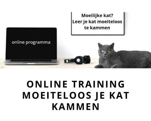online training moeiteloos je kat kammen